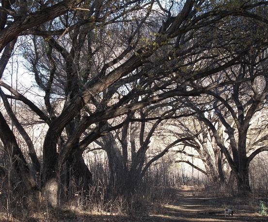 Nieu Bethesda Trees