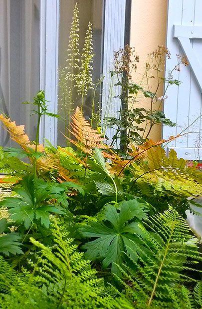 """jardin urbain - """"Les Jardins des Hurlevents """" http://www.plantes-vivaces-hurlevents.com/"""
