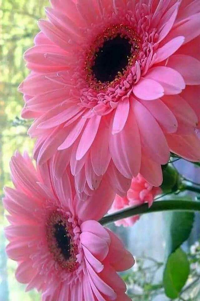 Pin By Natalie Hansen On Flowers
