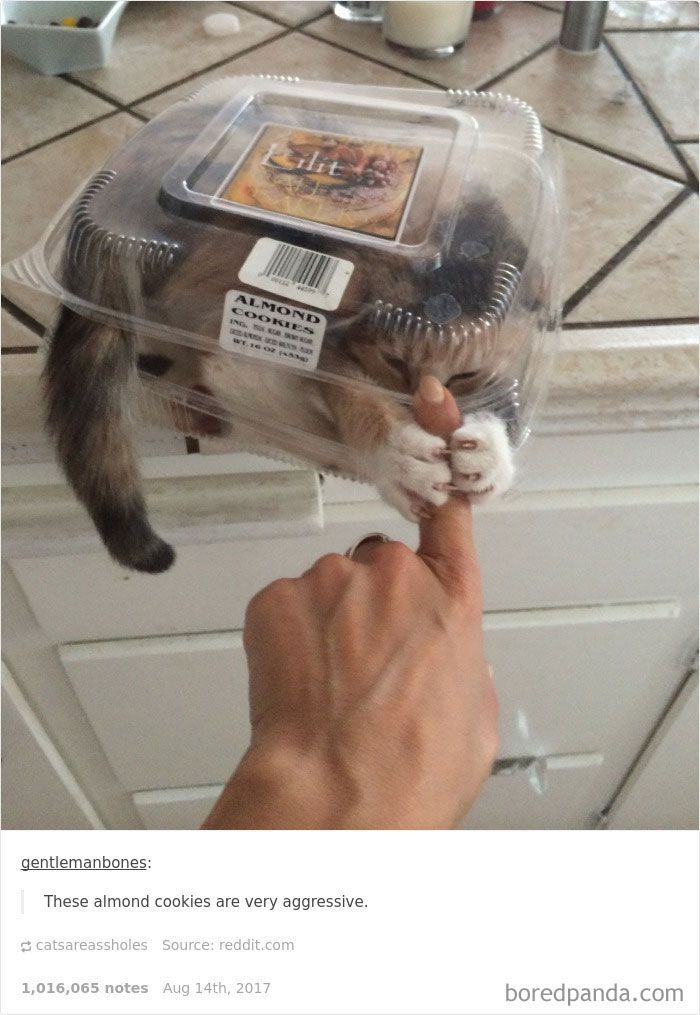 These almond cookies are very aggressive.