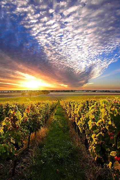 #bordeaux #vineyards