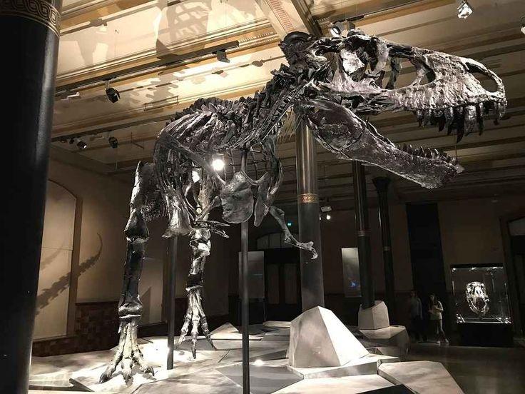 Il Tirannosauro rex, una leggenda del passato Tyrannosaurus è un genere di dinosauro teropode vissuto nel Cretaceo superiore, circa 68-66 milioni di anni fa (Maastrichtiano), appartenente alla famiglia dei tirannosauridi. Visse in quel che oggi