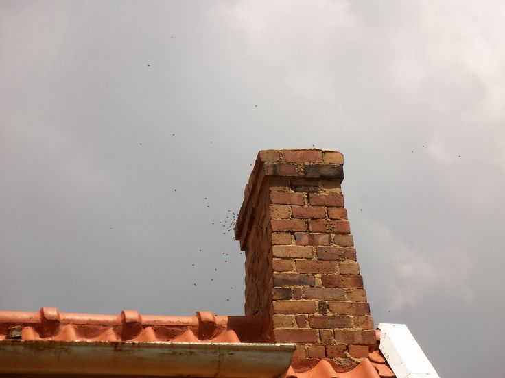 Bee Removal in Johannesburg, Removed bees in Randburg. Chimney
