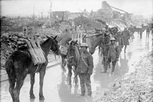 Canadian soldiers at Vimy Ridge with horses packing ammunition