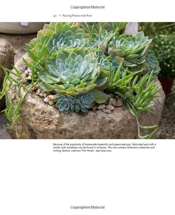 1000 images about large succulent containers on pinterest planters newport beach and agaves - Succulent container gardens debra lee baldwin ...