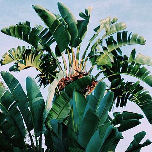 || FUN FACT || The first Solar Heated office building was in 1956  #solarlab #solar #installation #solarpv #solarinstall #panels #install #quality #adelaide #SA #southaustralia #smallbusiness #business #localbusiness #renewableenergy #energy #batterystorage #inverter #solarcutters #sun #sunshine #weather #gosolar #makinginstallseasy #environment #safetyfirst #isolator