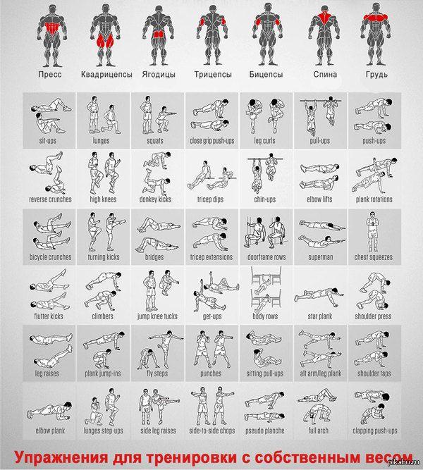 Таблица упражнений с собственным весом на различные мышечные группы калистеника,собственный вес