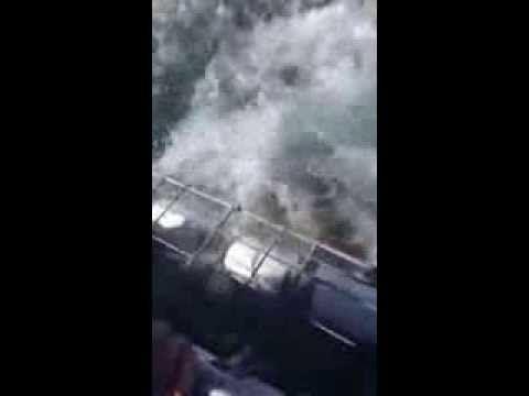 Большая белая акула напала на ныряльщика