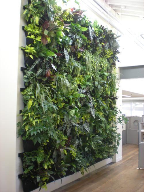La popularidad de los jardines verticales va en aumento como fórmula para decorar paredes exteriores e incluso interiores de una vivienda.