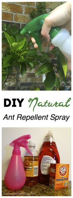 Forget harsh chemicals! This DIY natural ant repellent spray is safe, easy, cheap, and IT WORKS!