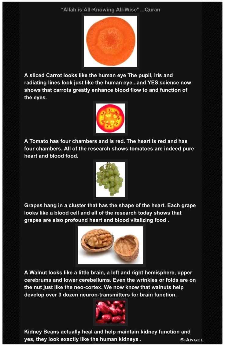Islamic Health Tips