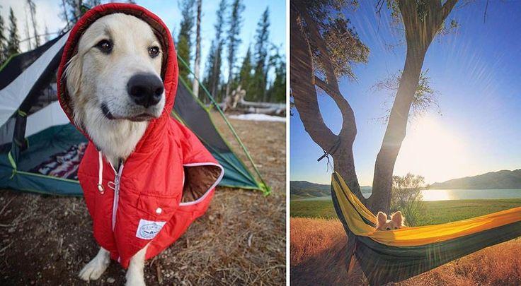 Райан Картер (Ryan Carter) — парень, который очень любит путешествовать, и не просто в одиночку, а вместе со своим псом по кличке Купер. Чтобы вдохновить и других владельцев собак на приключе…