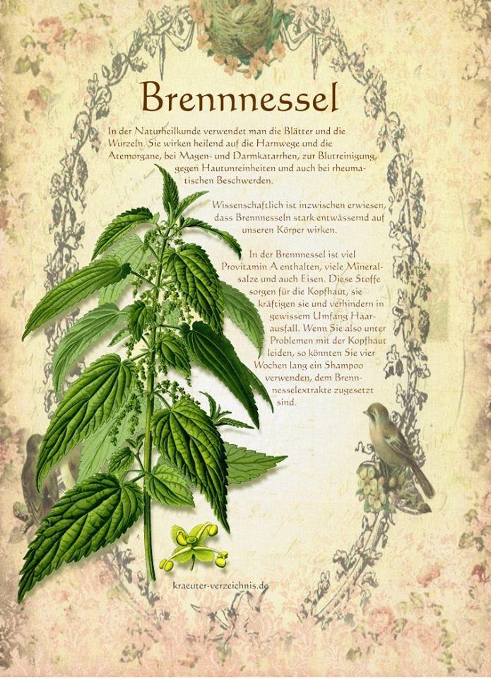 Herbs Garden, Aquaponics Greenhouse, Les Fruits, Kitchen Gardening, Organic  Gardening, Permaculture, Creme, Type 1, Flower Power