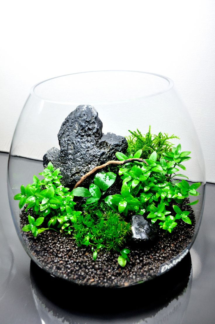 die besten 25 aquarium glas ideen auf pinterest diy. Black Bedroom Furniture Sets. Home Design Ideas