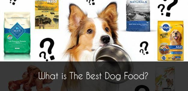 Efficient Graded Healthy Diet For Dogs Recommended Reading