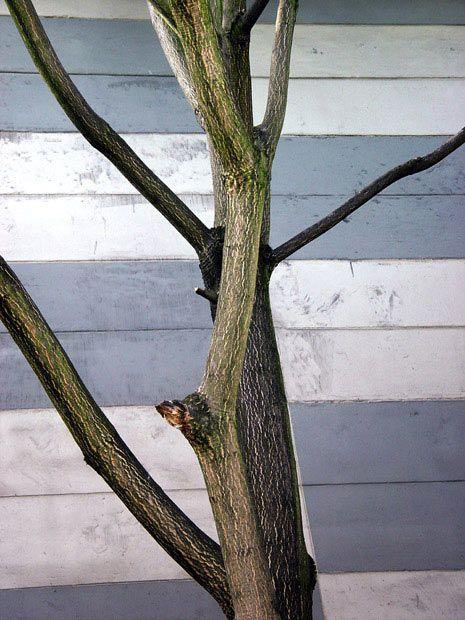 Heidi Specker, Im Garten,2003/04
