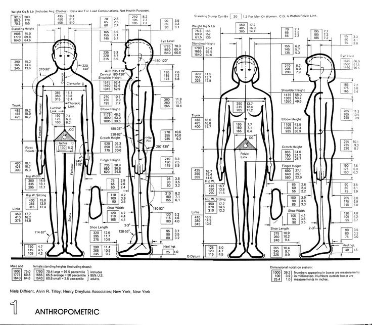 Classroom Furniture Dimensions And Anthropometric Measures : Anthropometric data for interior design home