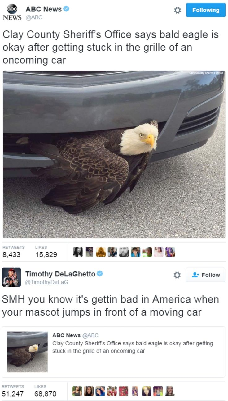 Of course an imported car coukd hurt the bald eagle