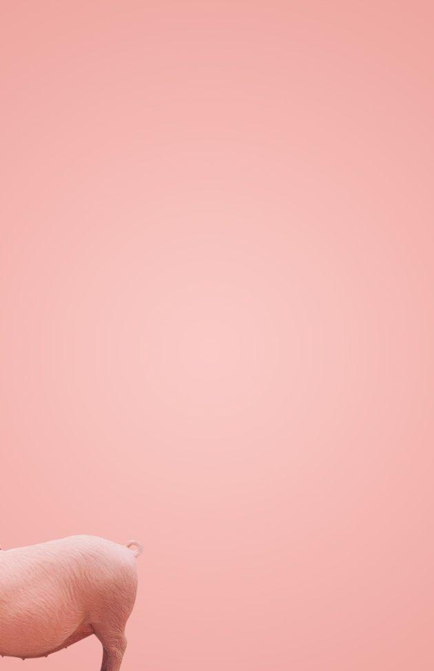 Cochon / Pink / Photographie / Délicat / Sensible / Cute / Colors / Animals / Popotin