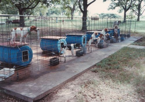 how to build a dog kennel off the ground