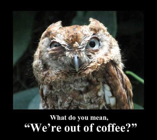 Normally I would pin this to my coffee board but since it's an owl.......