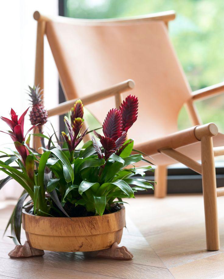 een weelderige tuin vol prachtige bloemen en planten en