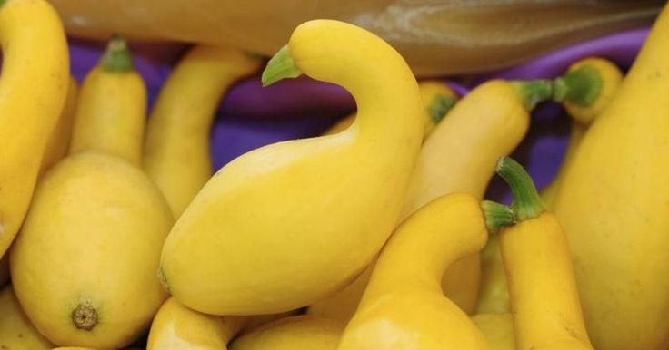 The unusual shape and bright color of yellow crookneck squash make it a standout among summertime vegetables. Like its summer squash counterparts, zucchini and straightneck yellow squash, yellow crookneck is a low-calorie star, with about 20 calories per cup. It contains vitamins A and C, potassium and dietary fiber, mostly in the skin which is...
