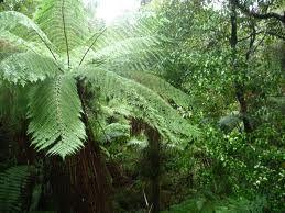 El bosque tropical neozelandés Fox Glacier 2846031