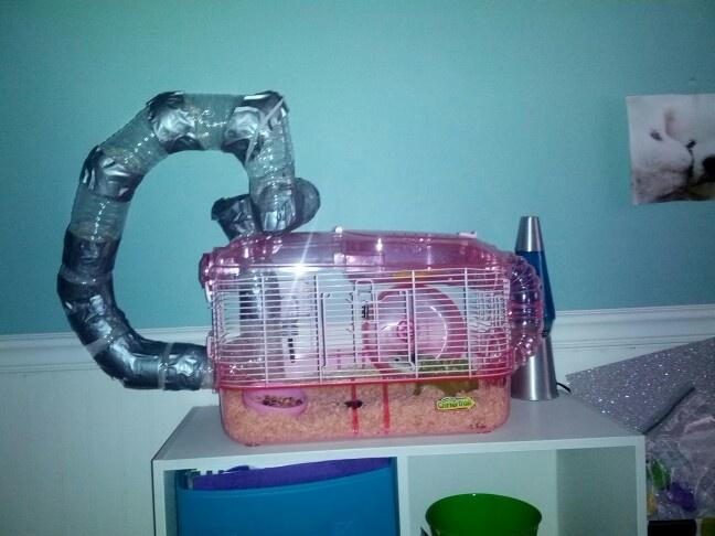 free tube hamster
