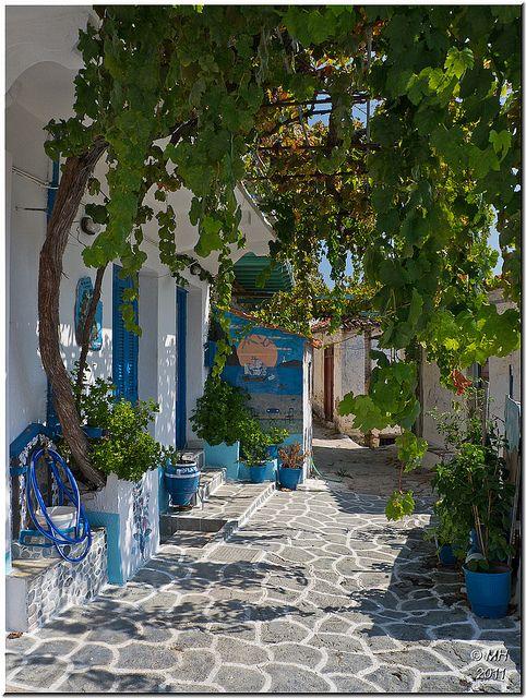 walking under the grapevines, Skopelos, Greece