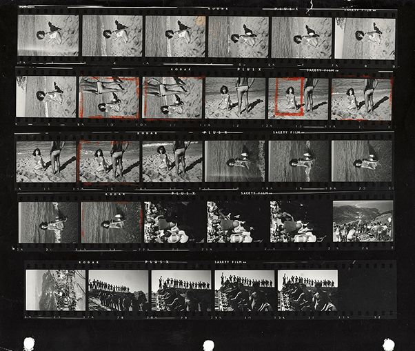 15 Best Contact Sheet Images On Pinterest | Contact Sheet, Leaves