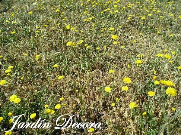 Flores silvestres amarillas pinterest for Jardin 61 bariloche