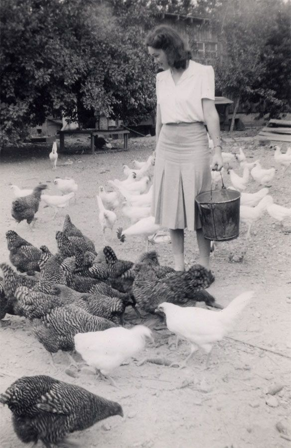 Time to feed the chickens. Vintage Photograph.