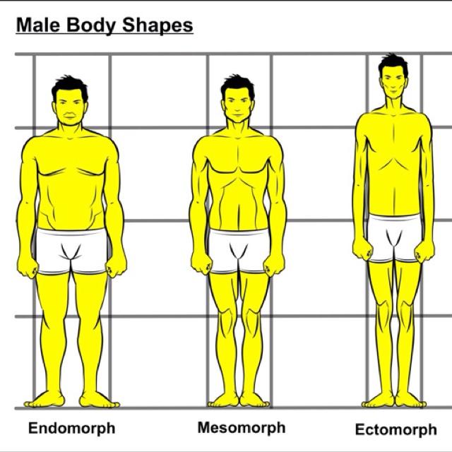 In shape mens body types