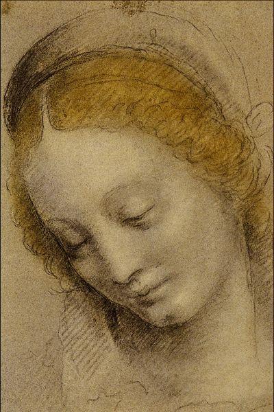 Bernardino Luini (1480-1532), Testa di donna, gessetto nero intensificato con pastello, c. 1500.
