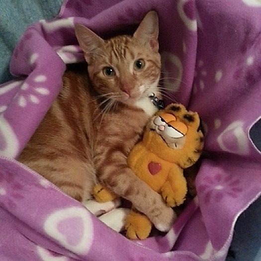 Another pic with his Garfield.