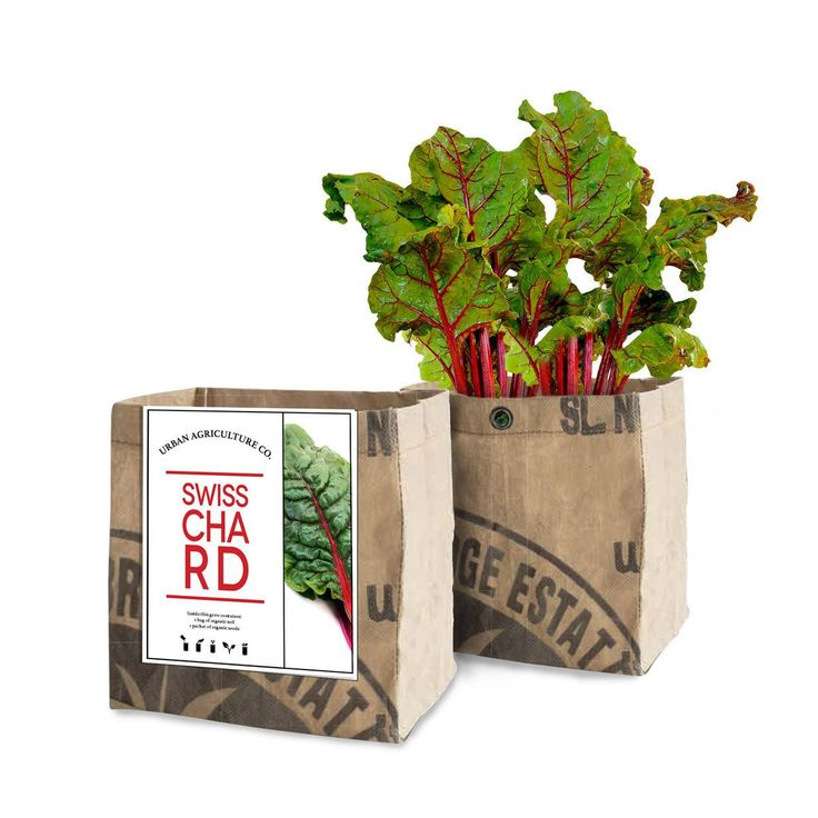 Swiss Chard Grow Kit by the Urban Agriculture Company