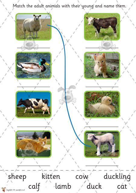 Teacher's Pet - Farm Animals and their Babies (cut & stick) - Premium Printable Game / Activity - EYFS, KS1, KS2, farming, baby, growth, gro...