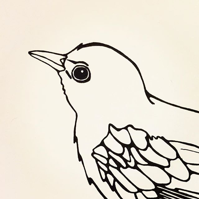 25 Beste Idee 235 N Over Vogel Tekeningen Op Pinterest