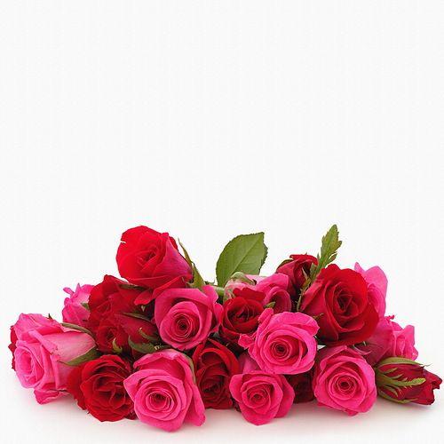 Rózsaszín rózsák