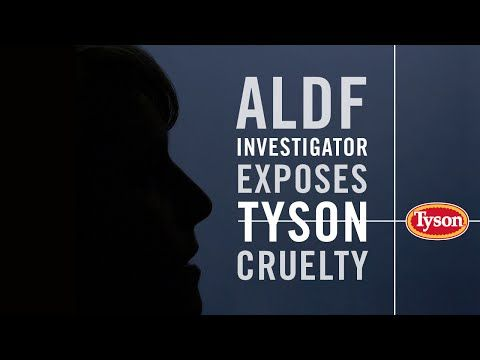 Secret Footage Exposes Tyson's Shocking Cruelty to Chickens