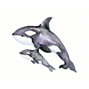 realistic orca tattoos - Google Search