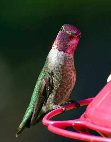 Birds, birds, birds and how to attract them.