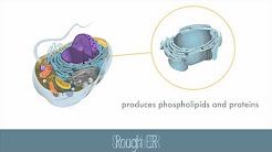 Parts of the Eukaryotic Cell - Teacher's Pet (Video)