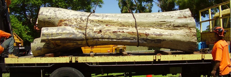 Tree Loppers, Mulching & Other Tree Services in Perth | WA Treeworks
