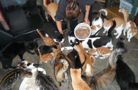 Dierenstages - U/D - Griekenl. - Skiathos  Als vrijwilliger/vrijwilliger dierverzorger zullen je taken bestaan uit het schoonmaken van de ruimten waar de katten verblijven, het omliggende terrein en de dagelijkse verzorgen van de katten, zoals het checken van oren, ogen, gebit  en de borstelen van de langharige katten en alle andere bijhorende taken.