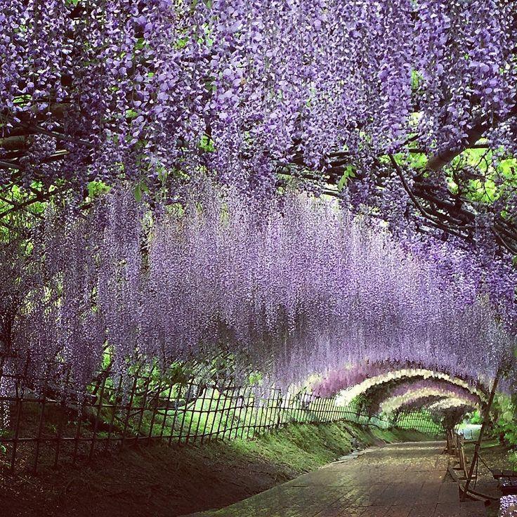 En este mismo instante, el rincón más bonito del mundo se encuentra en Japón
