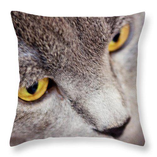 Serious Cat By Svetlana Yelkovan Throw Pillow#SvetlanaYelkovanFineArtPhotography #pillow  #ArtForHome #FineArtPrints #cat #eyes