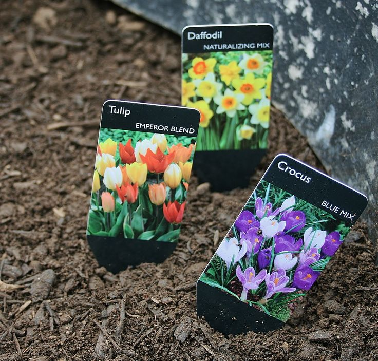 images  container gardening flowers