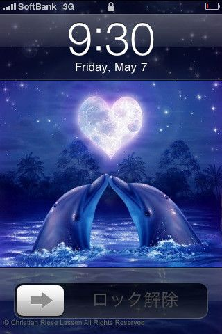 Dolphin Iphone Wallpaper Dolphin Love For Iphone Ipod Touch And